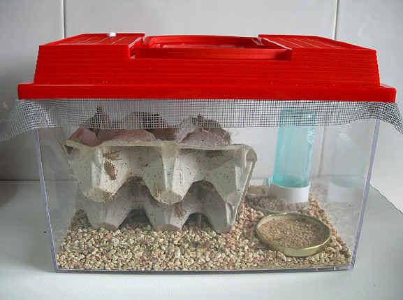 grillo habitat: